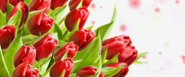 Поздравление ректора МПГУ с 8 марта