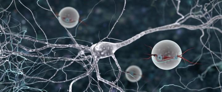 Активность нервной системы во время сна влияет на память