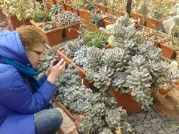 Студенты ИБХ выполнили задание по разработке ботанической экскурсии  на базе Аптекарского огорода