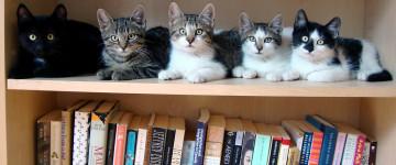 Уважаемые читатели, пора сдавать книги в библиотеку!