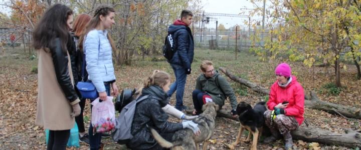 Студенты из Волонтёрского сектора Студенческого совета ИСГО посетили приют для животных «Бирюлёво»