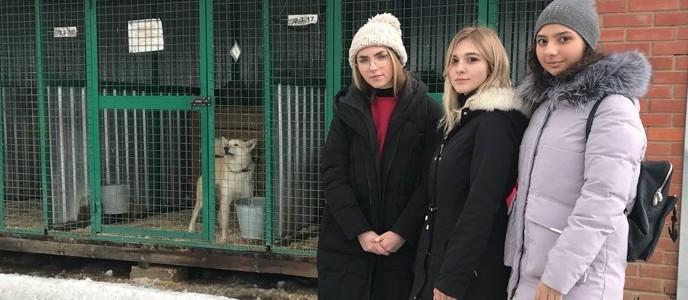 Неделя благотворительности для помощи животным в Институте международного образования