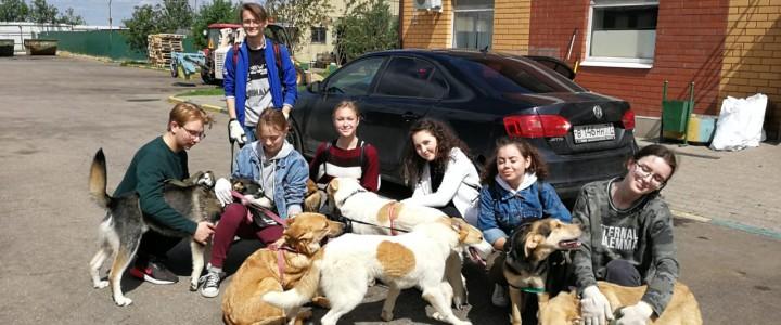 Проект «Лохматая душа»: визит волонтеров студенческого совета ИСГО МПГУ в кожуховский приют для бездомных животных