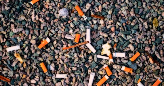 7 фактов, как сигареты влияют на окружающую среду
