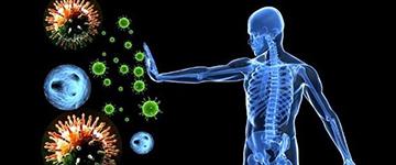 Что такое ревакцинация и как иммунные клетки оттачивают свое мастерство?