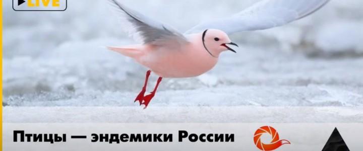 Доцент Института биологии и химии А.А. Мосалов выступил с лекцией Птицы – эндемики России