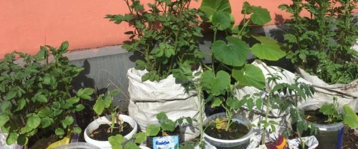 Студенты на крыше развели огород – вот!